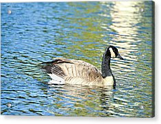 Acrylic Print featuring the photograph Goose And Sun Reflections by David Lawson