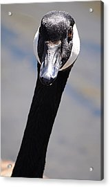 Goose At Belmar 1 Acrylic Print