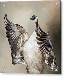 Goose Chase Acrylic Print