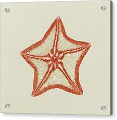 Goose Foot Starfish Acrylic Print by Philip Henry Gosse