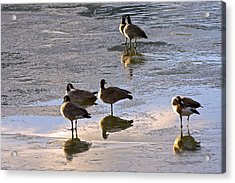 Goose Ice Refections Acrylic Print by James Steele