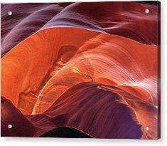 Goose In Antelope Acrylic Print