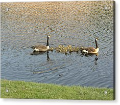 Goose Pond 1 Acrylic Print by Nancy Ferrier