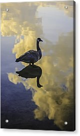 Acrylic Print featuring the photograph Goose Silhouette 2 by Sherri Meyer