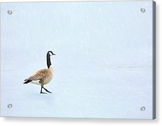 Acrylic Print featuring the photograph Goose Step by Nikolyn McDonald