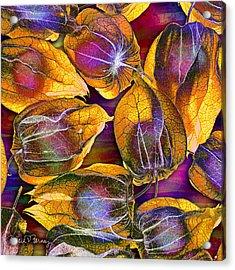 Goosed Berry Pods Acrylic Print