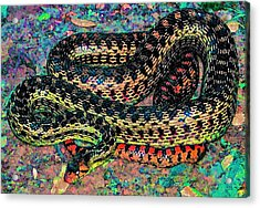 Acrylic Print featuring the photograph Gopher Snake by Pamela Cooper