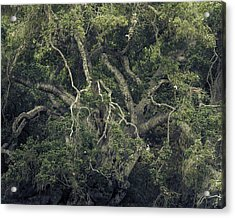 Acrylic Print featuring the photograph Gordian Oak by Alexander Kunz