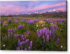 Gore Range Sunrise Acrylic Print by Aaron Spong