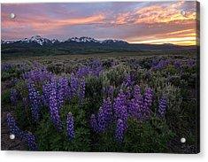 Gore Range Sunset Acrylic Print by Aaron Spong