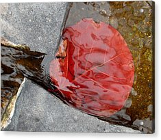 Gorged - Red Leaf In Vibrant Water Acrylic Print