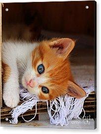 Gorgeous Blue Eyes Acrylic Print