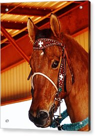 Gorgeous Horse And Bridle Acrylic Print