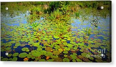 Gorham Pond Lily Pads Acrylic Print