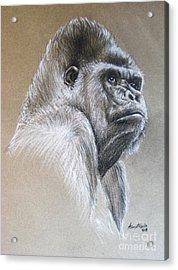 Gorilla Acrylic Print by Anastasis  Anastasi