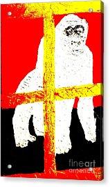 Gorilla Hogle Zoo 1 Acrylic Print by Richard W Linford
