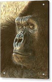 Gorilla Acrylic Print by Marlene Piccolin