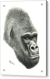 Gorilla Acrylic Print by Mary Rogers