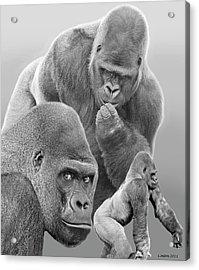 Gorilla Montage Acrylic Print