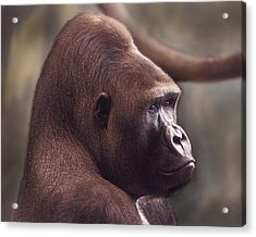 Gorilla Portrait Acrylic Print