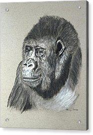 Gorilla - Wildlife Art Acrylic Print by Barry Jones