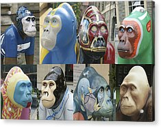 Gorillas In The Street Acrylic Print