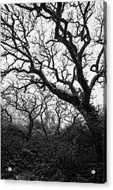 Gothic Woods II Acrylic Print