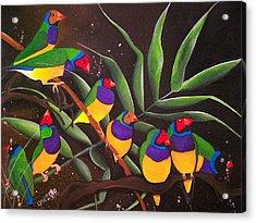 Gouldian Finch Rainbow Acrylic Print by Una  Miller