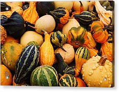 Gourds Acrylic Print by Jame Hayes