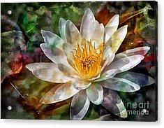 Grace Acrylic Print by Clare Bevan