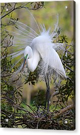 Grace In Nature Acrylic Print