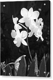 Grace Acrylic Print by Jim Derks