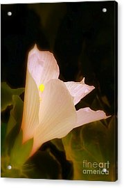 Grace Acrylic Print by Priscilla Richardson