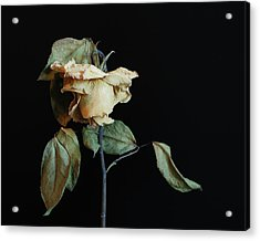 Acrylic Print featuring the photograph Graceful Aging by Art Shimamura