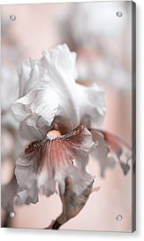 Acrylic Print featuring the photograph Graceful Dream by Jenny Rainbow