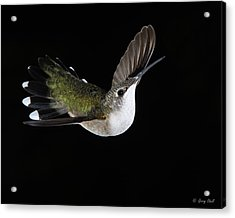 Graceful Acrylic Print by Gerry Sibell