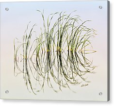 Graceful Grass Acrylic Print by Bill Kesler