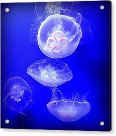 Graceful Jellies - Ballerinas Of The Sea Acrylic Print