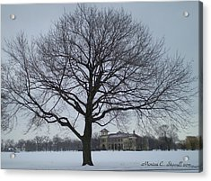 Graceful Tree And Belle Isle Eating Casino In Distance Acrylic Print