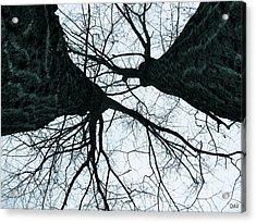 Graet Oaks Acrylic Print by Debra     Vatalaro