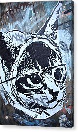 Graf Cat Acrylic Print by Jez C Self