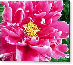 Gram's Peony Acrylic Print by JAMART Photography