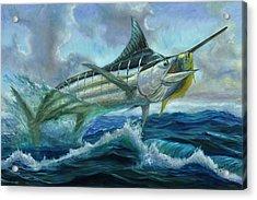 Grand Blue Marlin Jumping Eating Mahi Mahi Acrylic Print