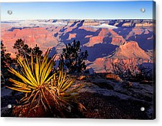 Acrylic Print featuring the photograph Grand Canyon 31 by Donna Corless