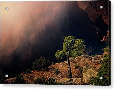 Grand Canyon Juniper Acrylic Print