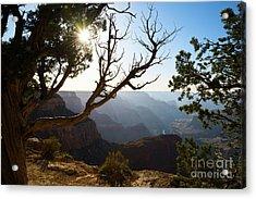Grand Canyon Light Acrylic Print by Jamie Pham