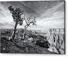 Grand Canyon - Monochrome Acrylic Print by Darren White