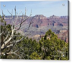 Grand Canyon National Park South Rim Acrylic Print