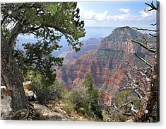 Grand Canyon North Rim - Through The Trees Acrylic Print
