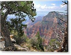 Grand Canyon North Rim - Through The Trees Acrylic Print